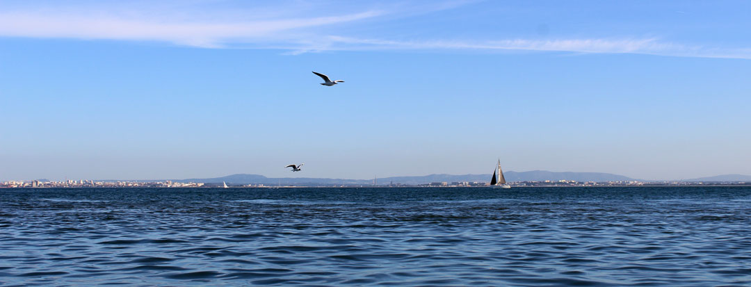 Boat Tours on Tagus River