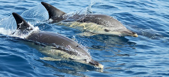 Dolphin Watching Lisbon