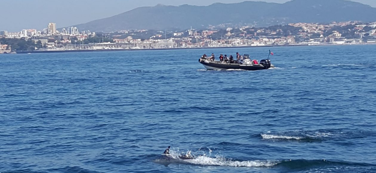 boat-tour-to-find-dolphins-off-sintra