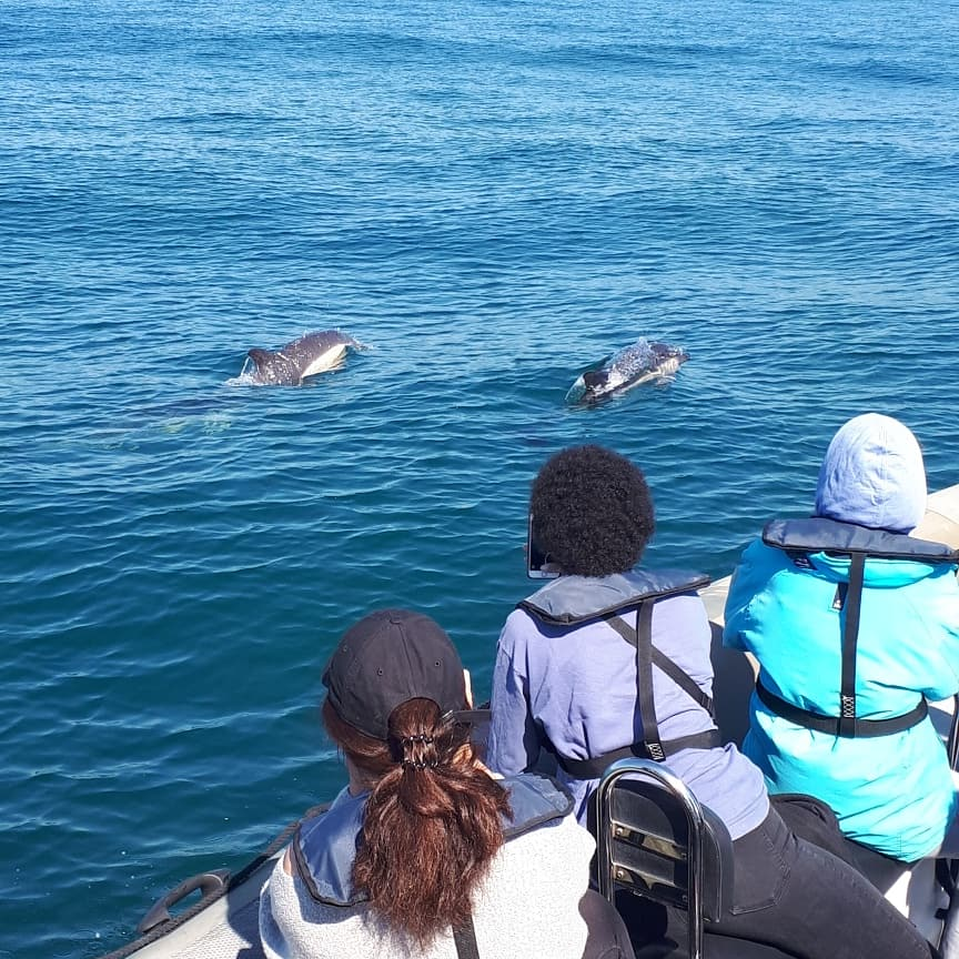 dolphin-watching-lisbon-boat