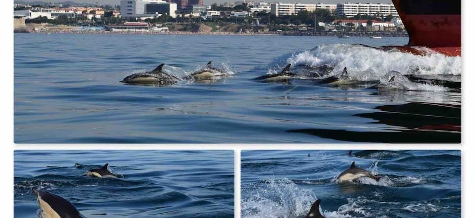 dolphins-in-lisbon