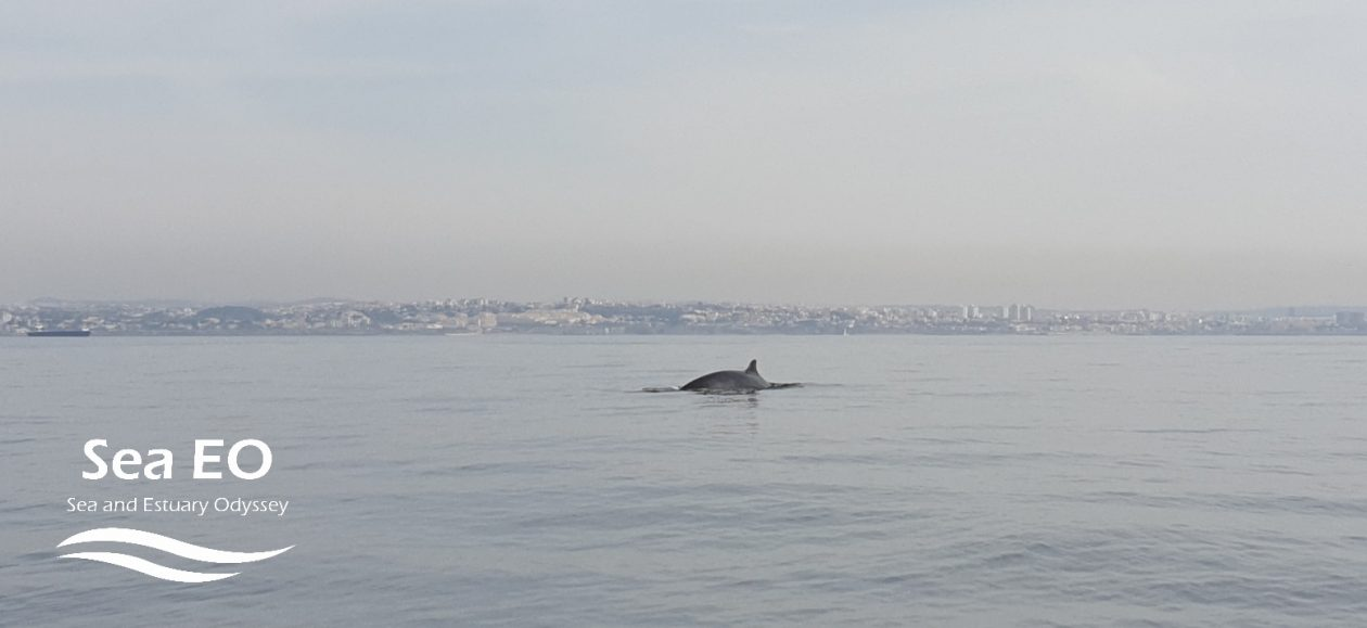 minke-whale-watching-lisbon