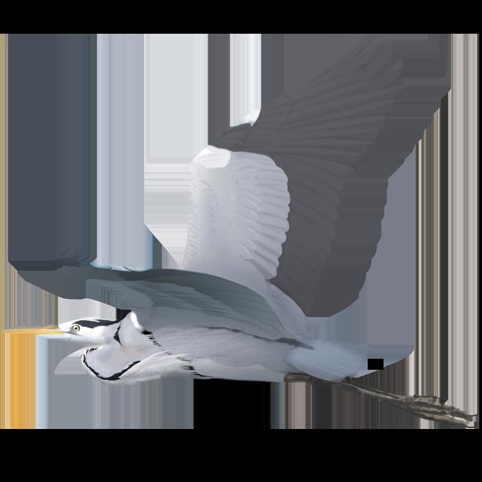 Grey Heron of the Tagus Estuary