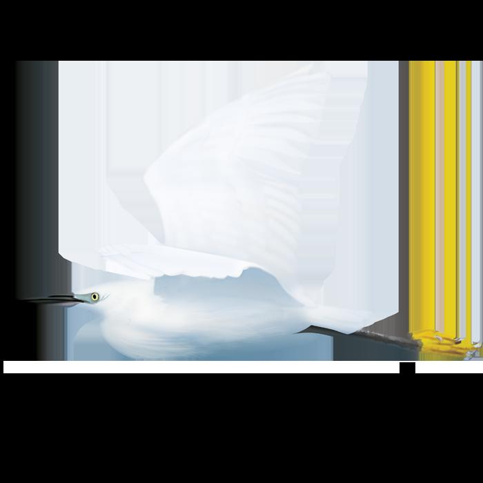 Listtle Egret of the Tagus Estuary