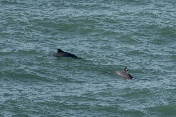 dolphins-close-to-lisbon