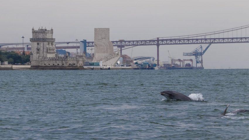 Golfinhos-no-tejo